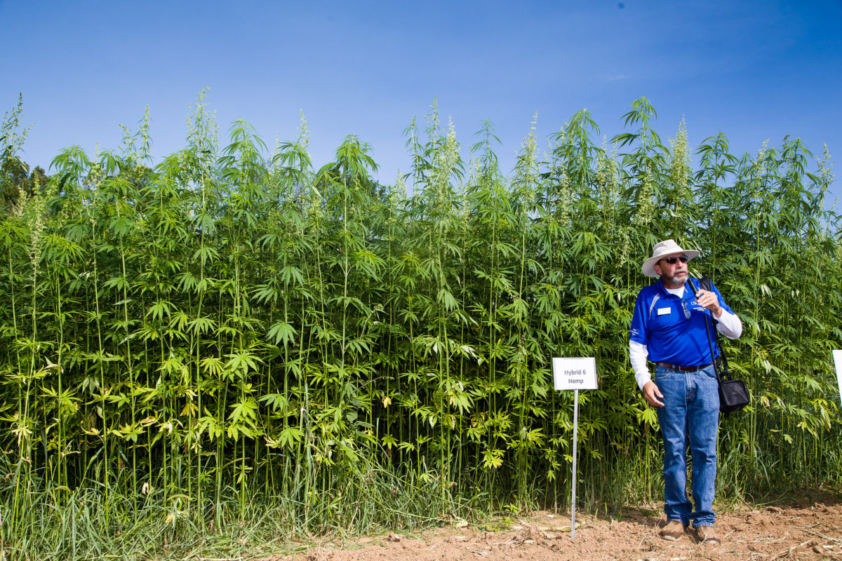 Will the Promise of Industrial Hemp Deliver?   Civil Eats