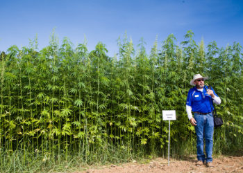 Industrial Hemp Field Day at the University of Kentucky College of Agriculture