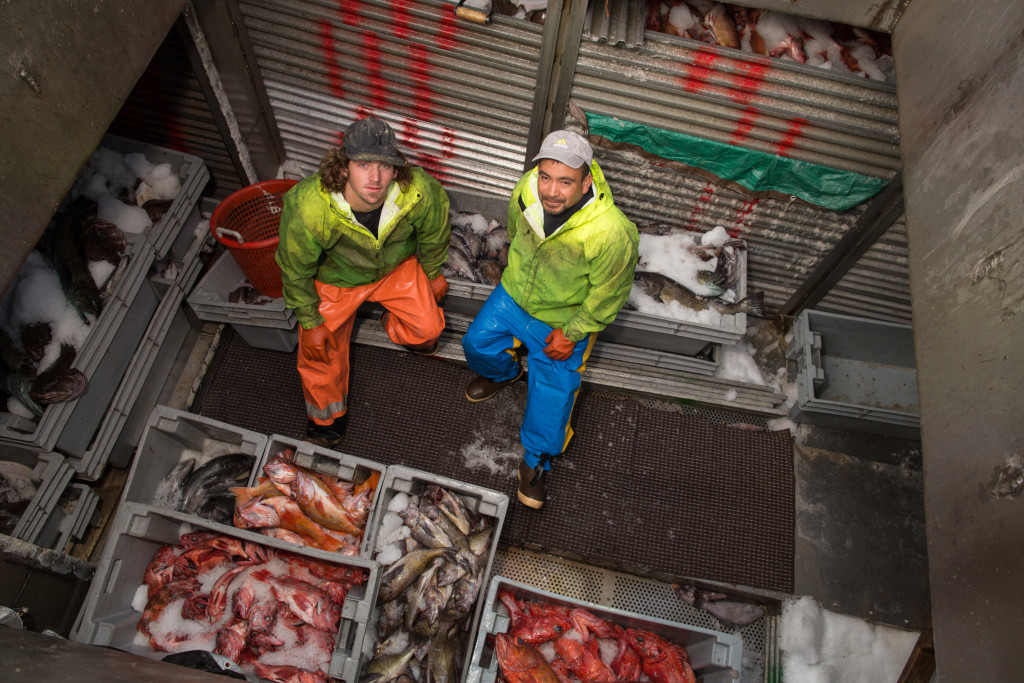 Monterey Fishermen Below Deck with Fish
