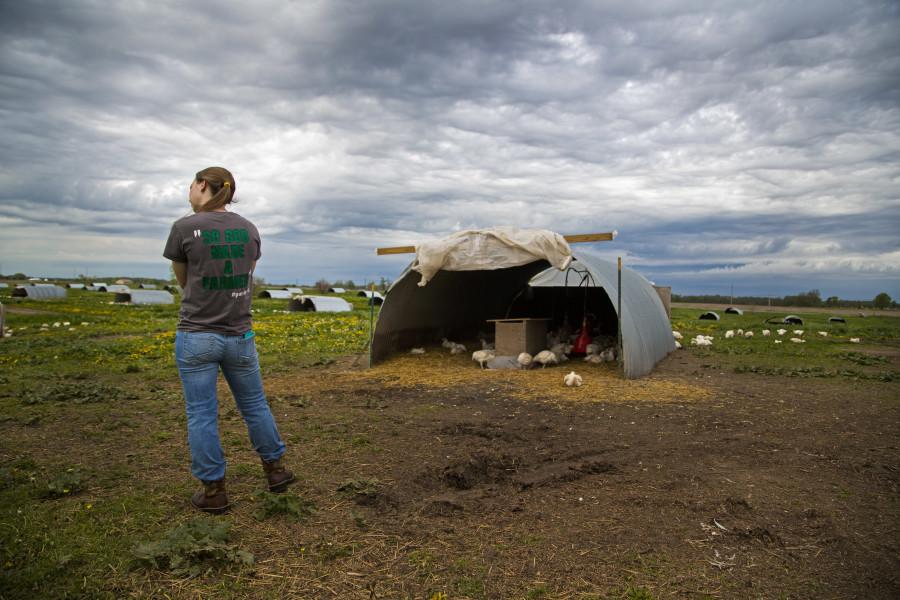 Pasture-Raised Chickens at Gunthorp Farms