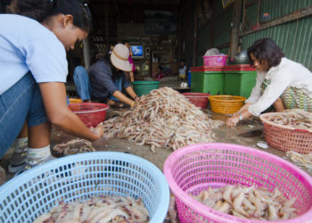 Thailand Shrimp Workers