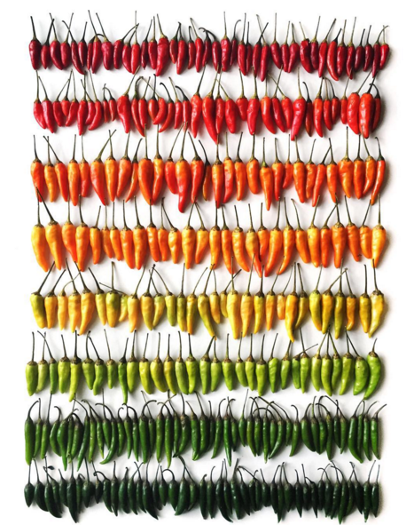 Pepper Gradient by Photographer Brittany Wright
