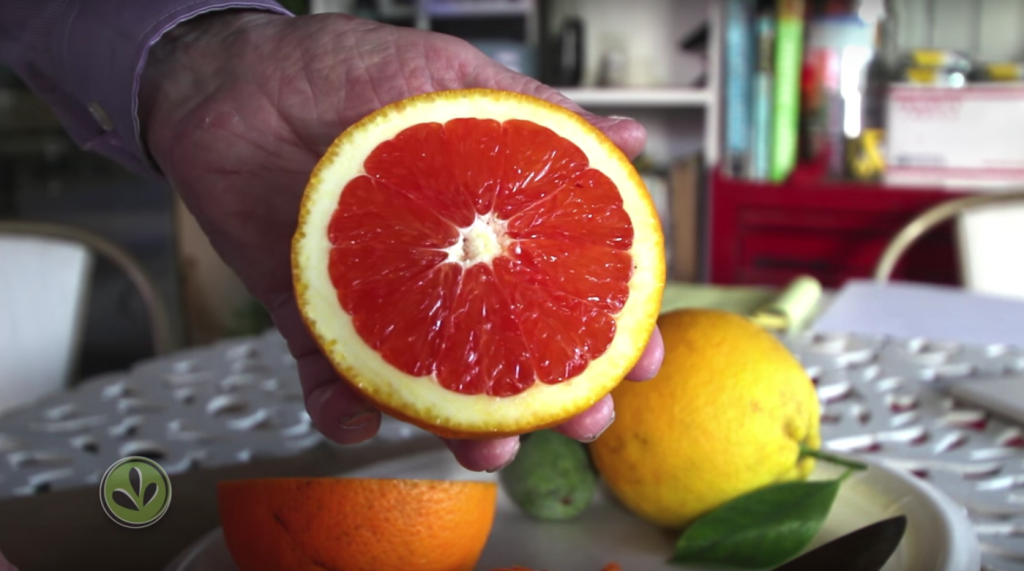 One of Russ Finch's Nebraska-Grown Citrus Cut in Half