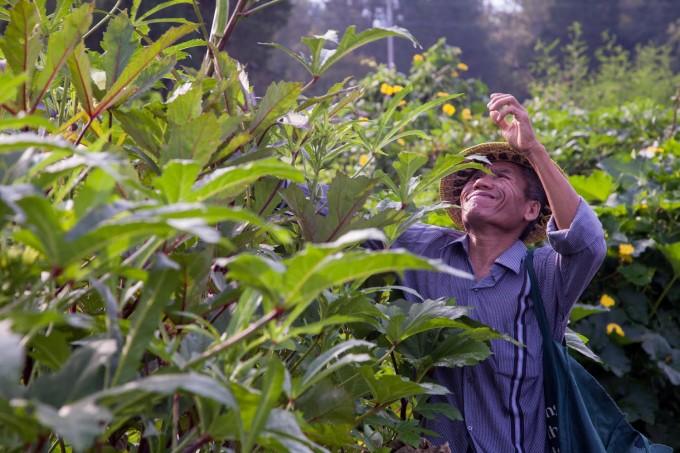 Burmese Refugee Farmer in North Carolina