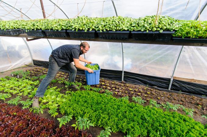 Curtis Stone in his Urban Farm