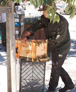 Robert MacKimmie Handling Bee Hive