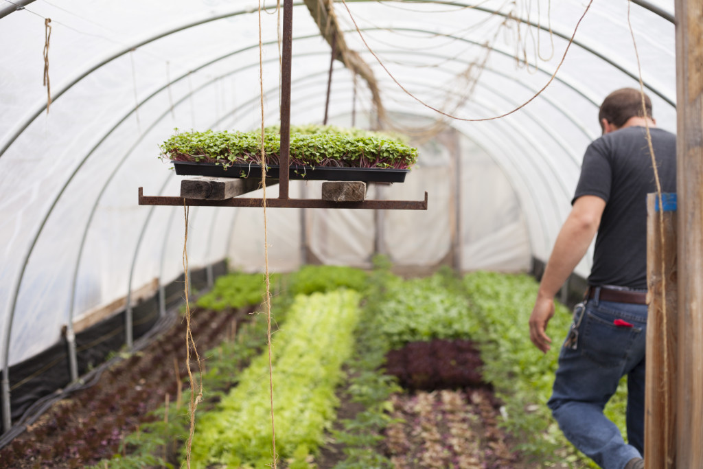 How Urban Farmers Can Earn $75,000 on 15,000 Square Feet