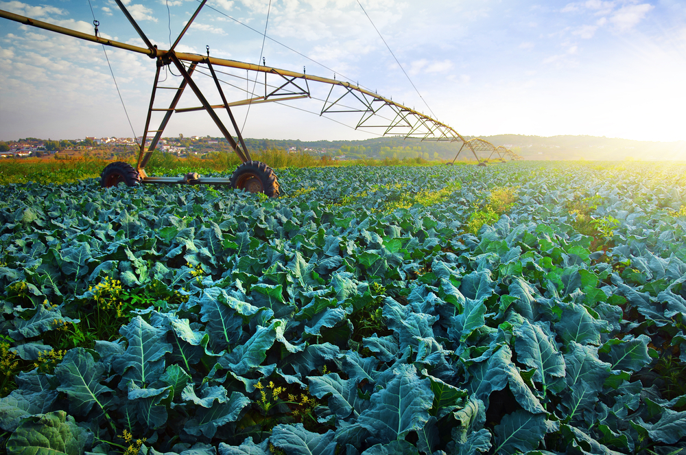 Should We Water Ca Crops With Oil Field Wastewater