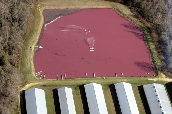 Waste Containment Pool at Hog Facility in North Carolina