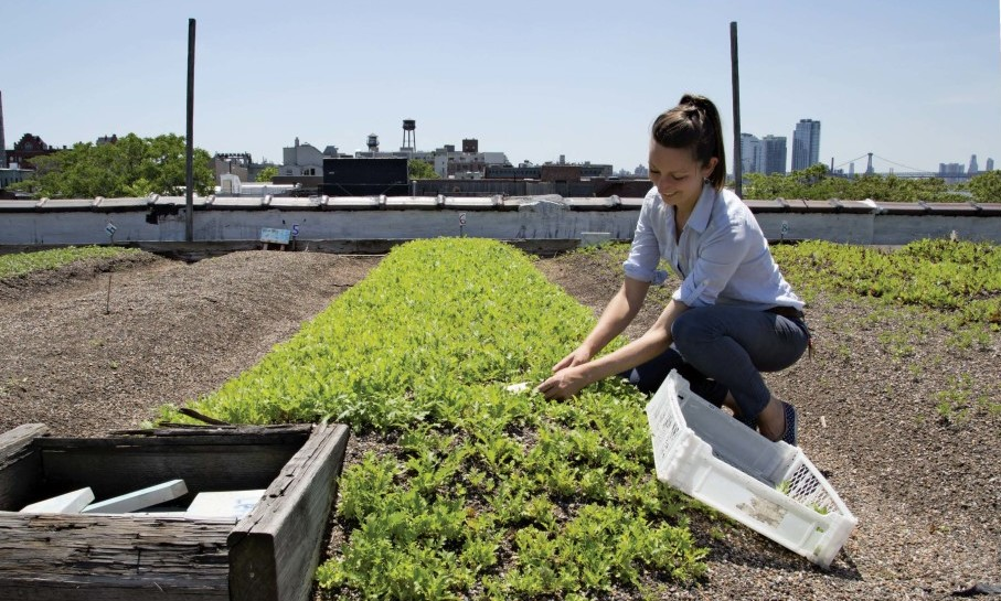 Writer Annie Novak Tending to Rooftop Garden