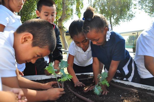 Compton Herald School Children Tend to Plants in Learning Garden