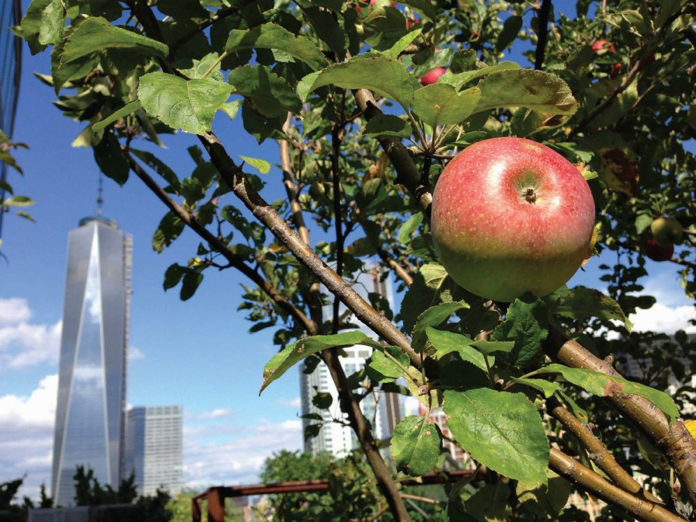 Rooftop Farm with One World Trade Center in Background