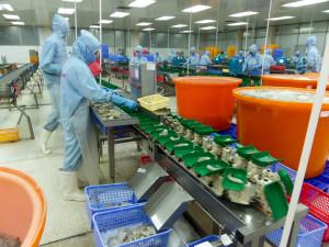 Shrimp Peeling Factory in Vietnam
