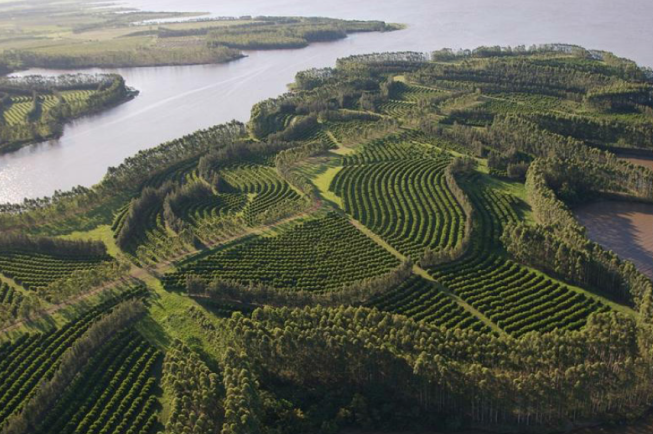 Terraced Land for Carbon Farming