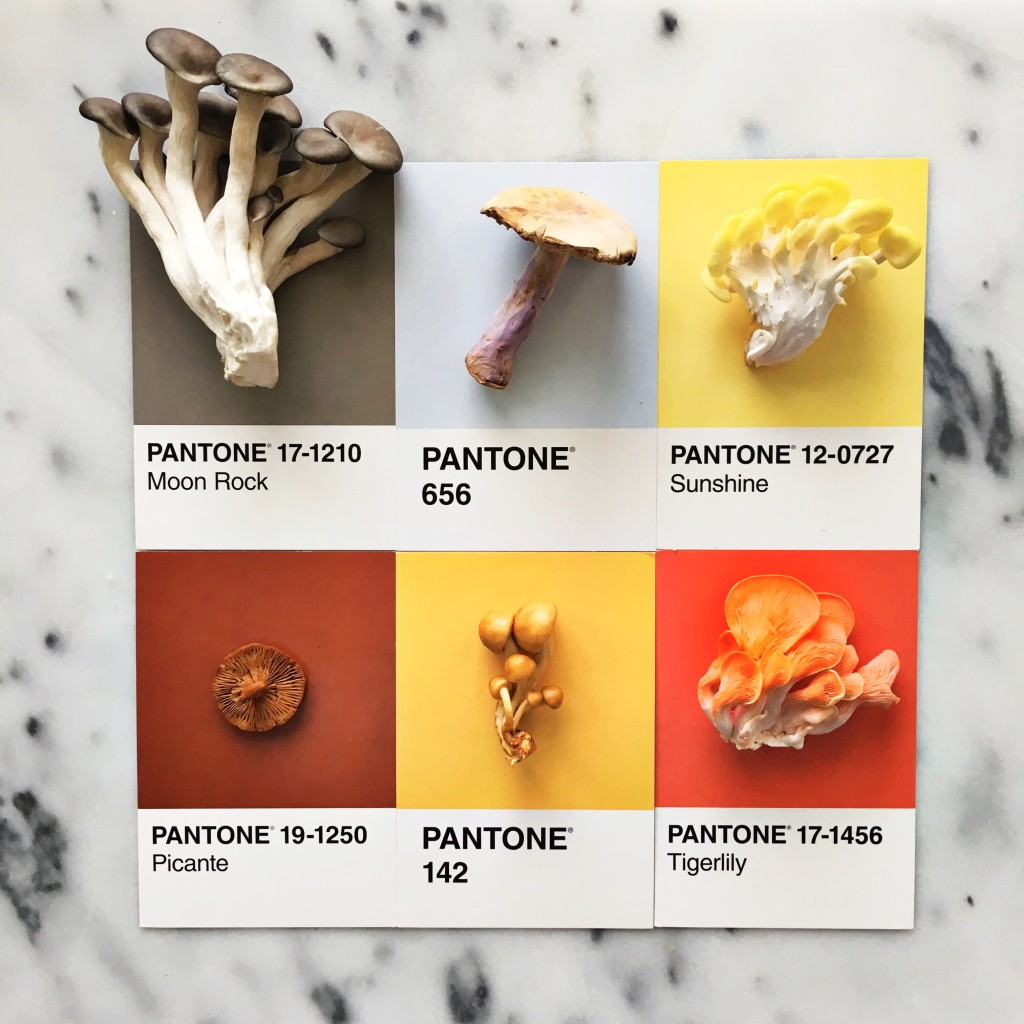 Mushroom Colors - Art by Lucia Litman on Instagram