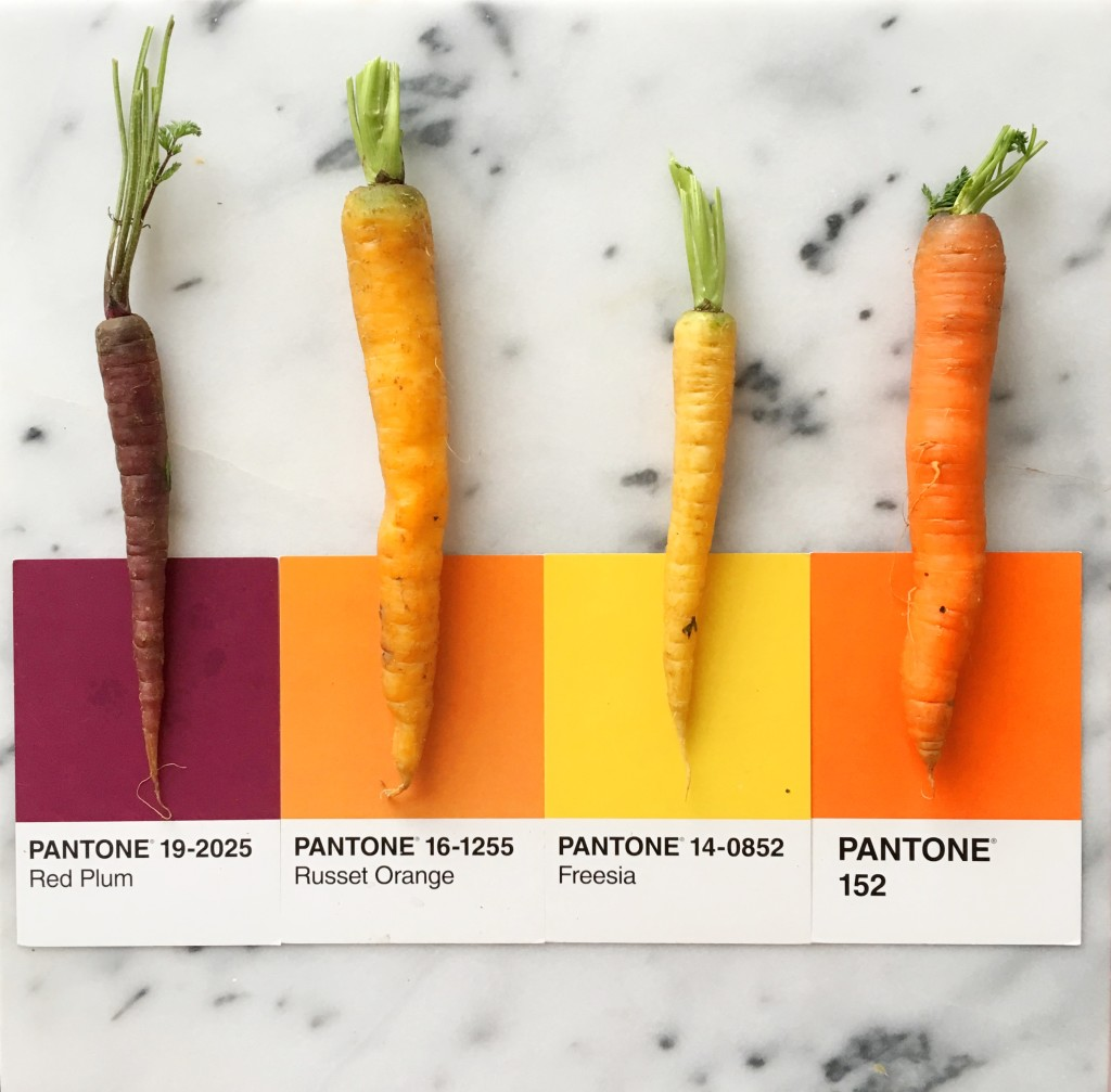 Carrot Colors - Art by Lucia Litman on Instagram
