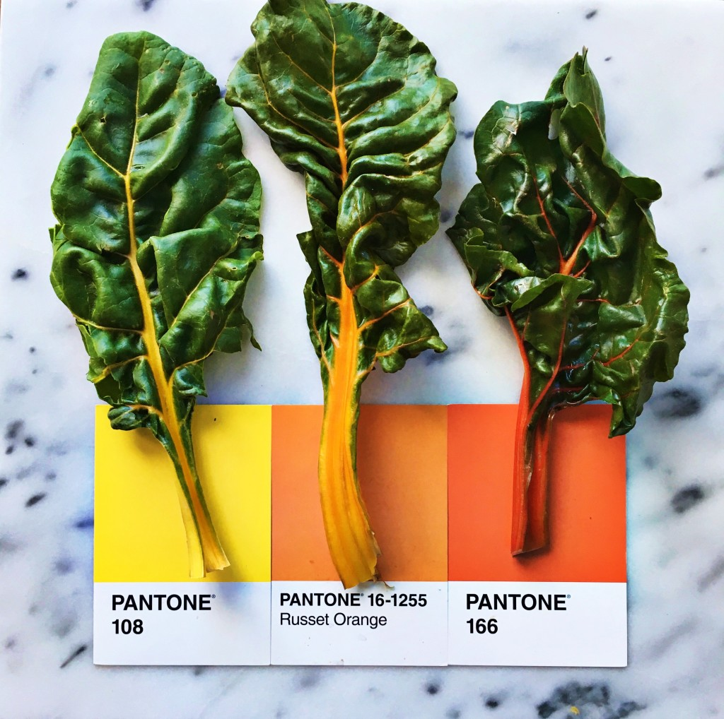 Swiss Chard Colors - Art by Lucia Litman on Instagram