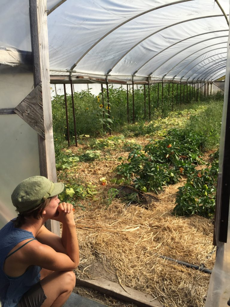 Can Permaculture Make a Dent in America's Farm Landscape?