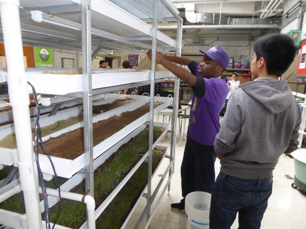 Kids in Hydroponic Garden at Carl Schurz High School Food Science Lab