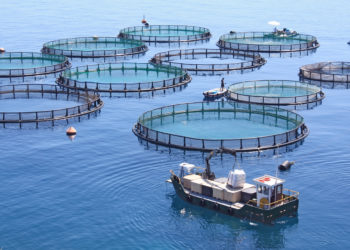 Commercial Fish Farming Operation