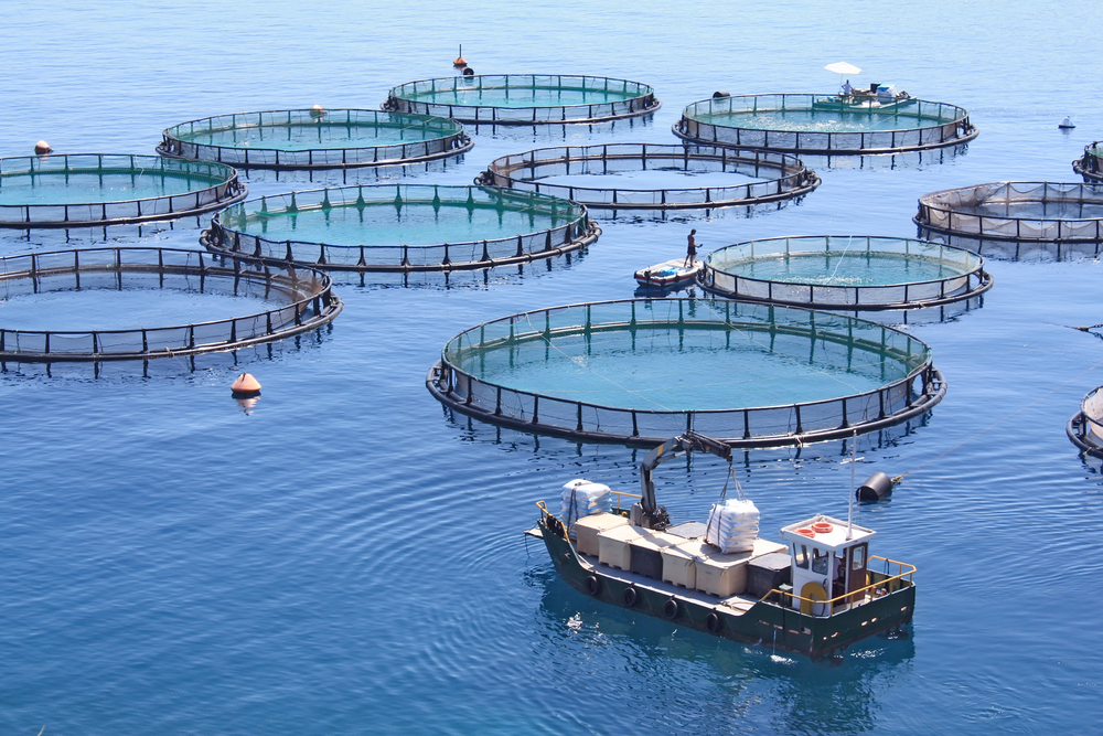 Should We Be Farming More Fish in the Great Lakes?