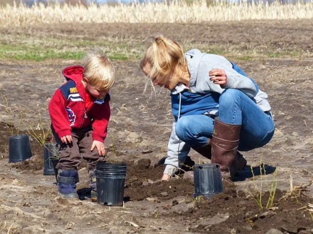 farmers planting blueberries