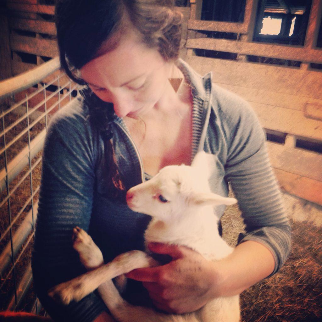 mere w newborn lamb (1)