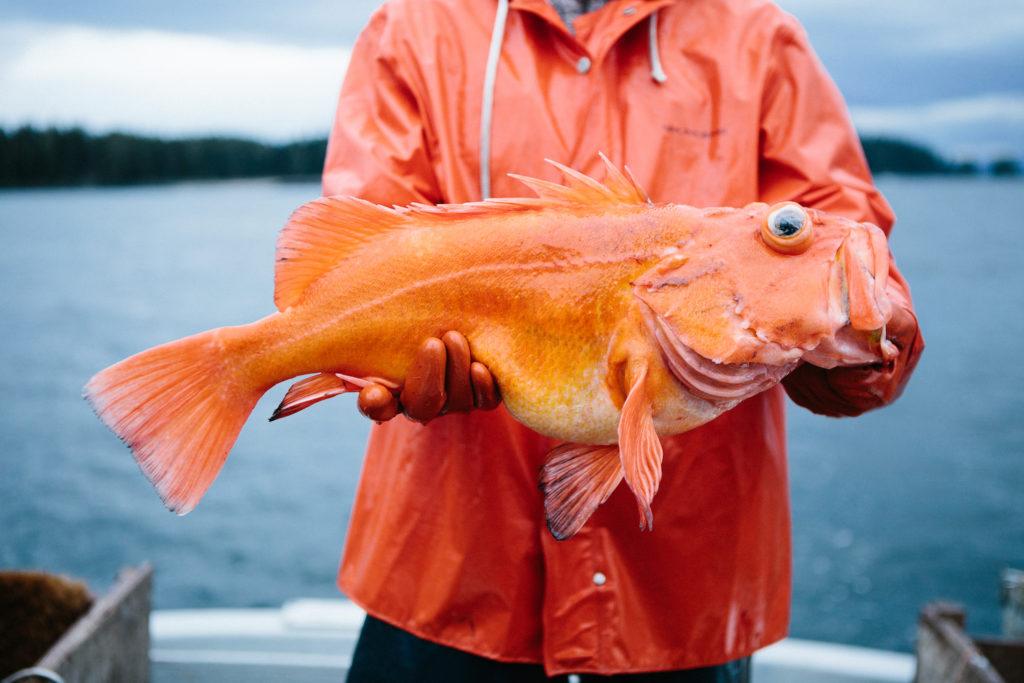 feature-salmon