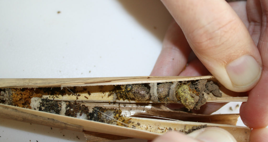 opening nesting tubes