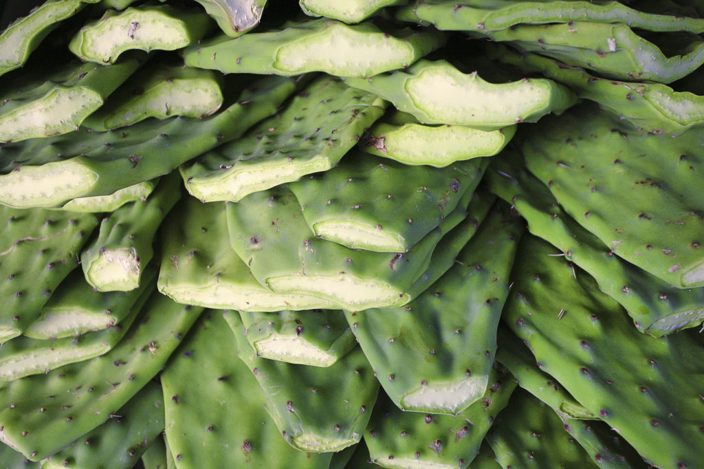 Nopales / Cactus paddles in market, San Francisco, California