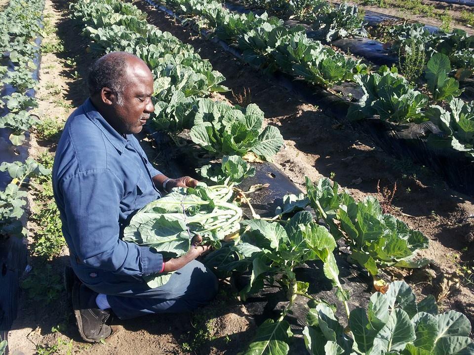 Gullah farmer