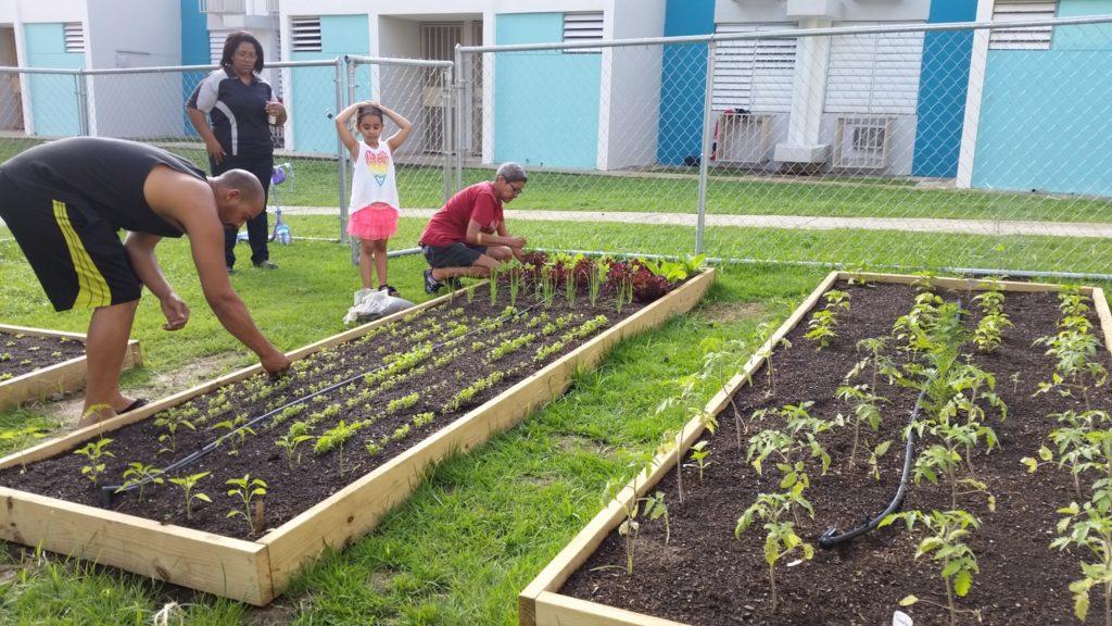 garden in puerto rico
