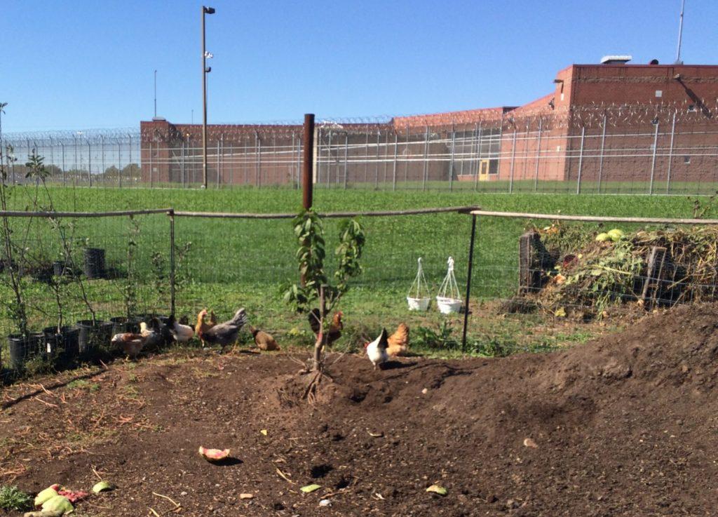 PPS prison farm compost pile