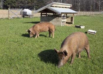 humane farm