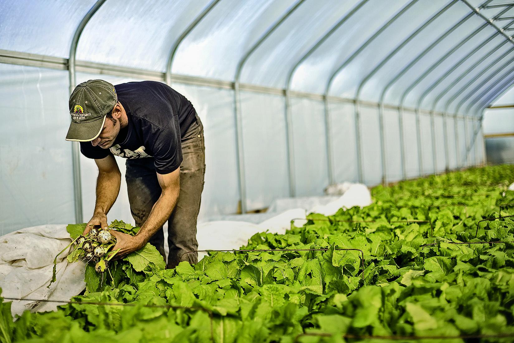Ben Hartman lean farming