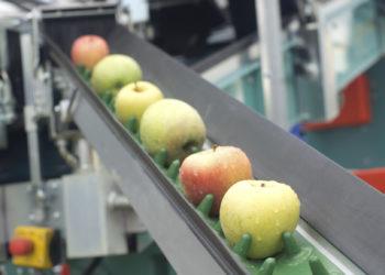 apples trump