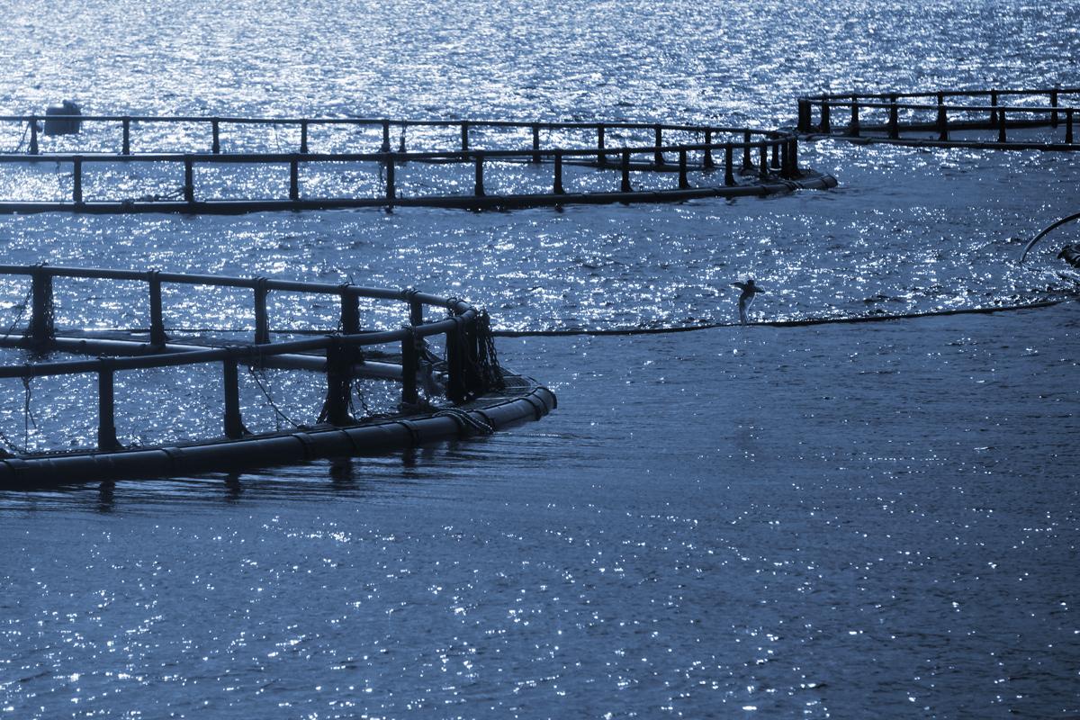 ocean aquaculture