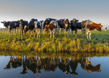 cattle waters of the U.S.