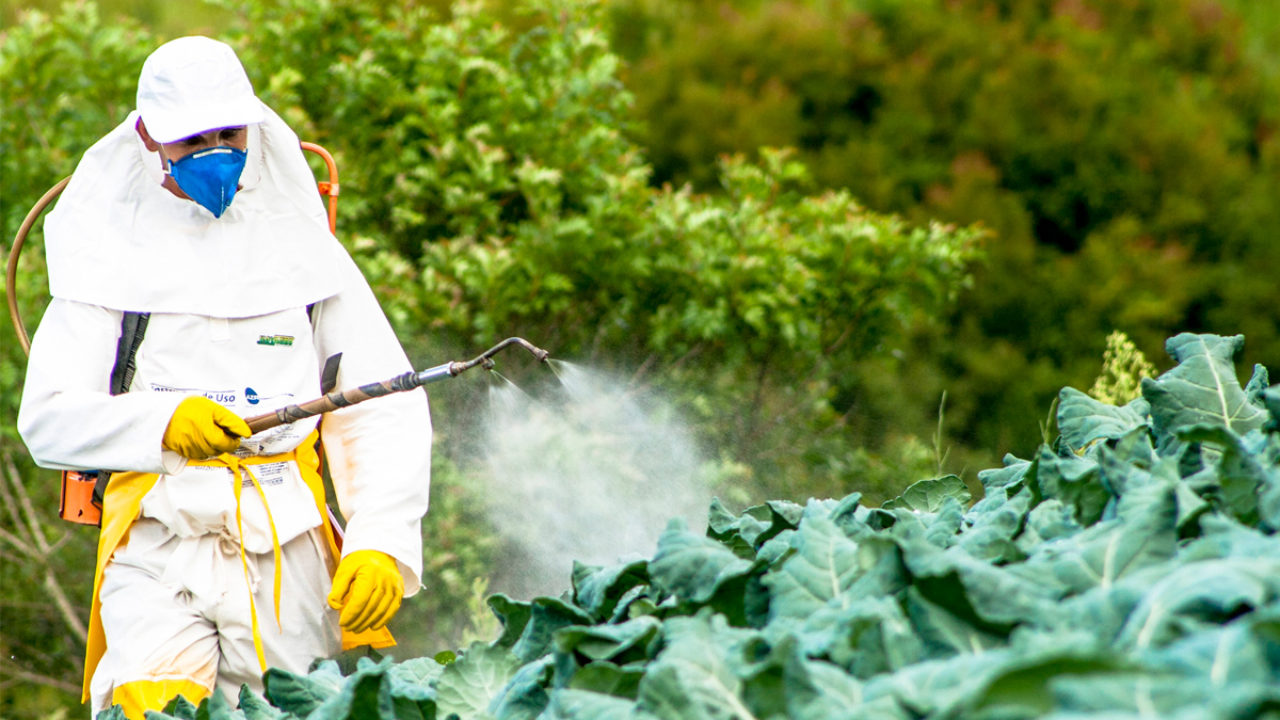 New UN Report: Pesticides Don't Feed the World | Civil Eats