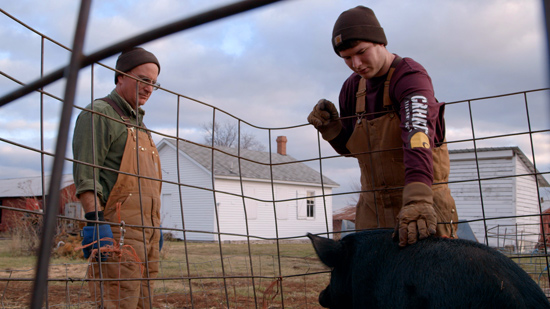 Sustainable farm and film