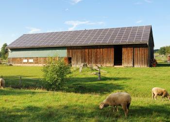 solar farmland