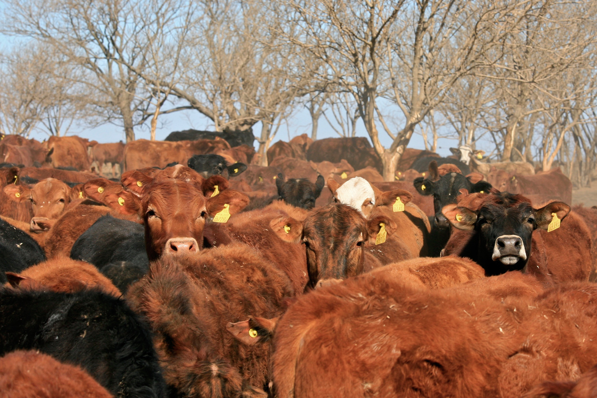 Through lobbying, marketing, and proselytizing about cheap meat, the global meat  industry is working hard to keep industrially produced meat on the menu, ...