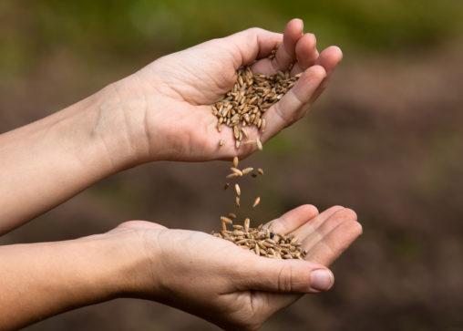 native seeds