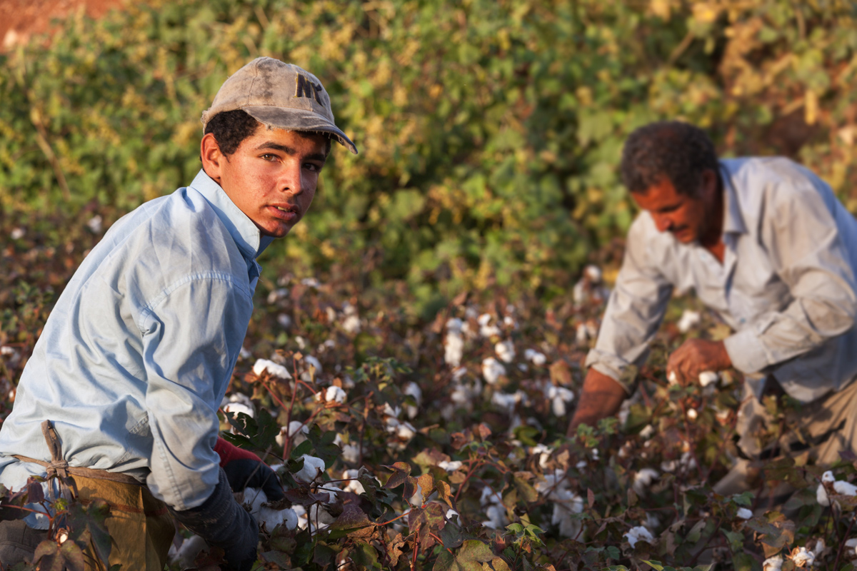civileats.com - Elizabeth Grossman - New 'Blue Card' Proposal Would Protect Farmworkers from Deportation