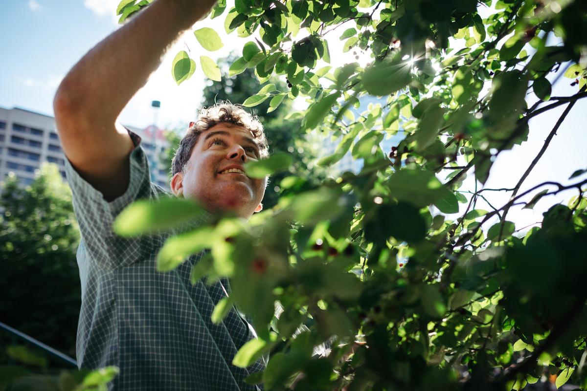 urban gleaning