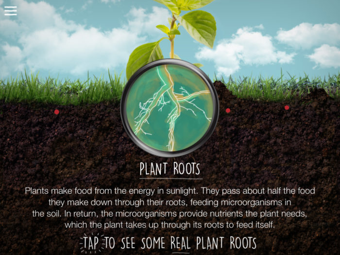plant roots screenshot from the soil app