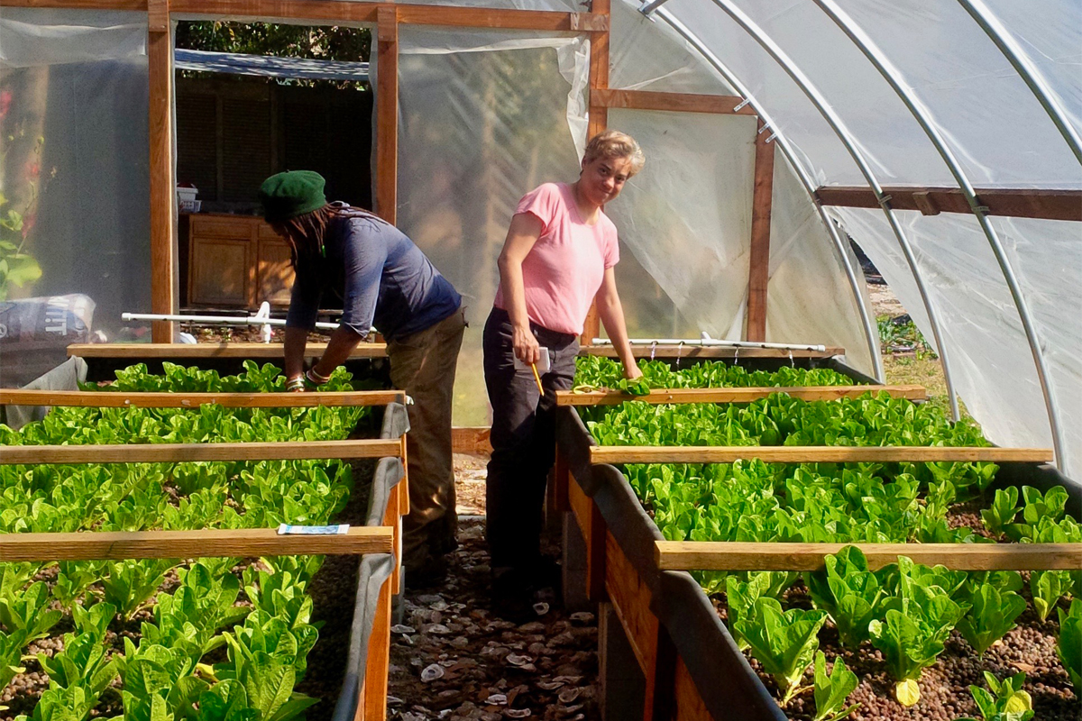 Aquaponics Farmers Band Together To Set Their Industry