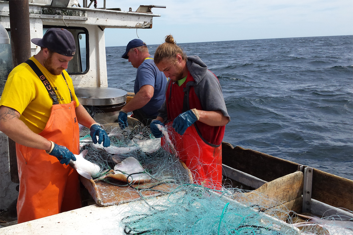 Pier to plate brings sustainably harvested 39 under loved for Cape cod fish market