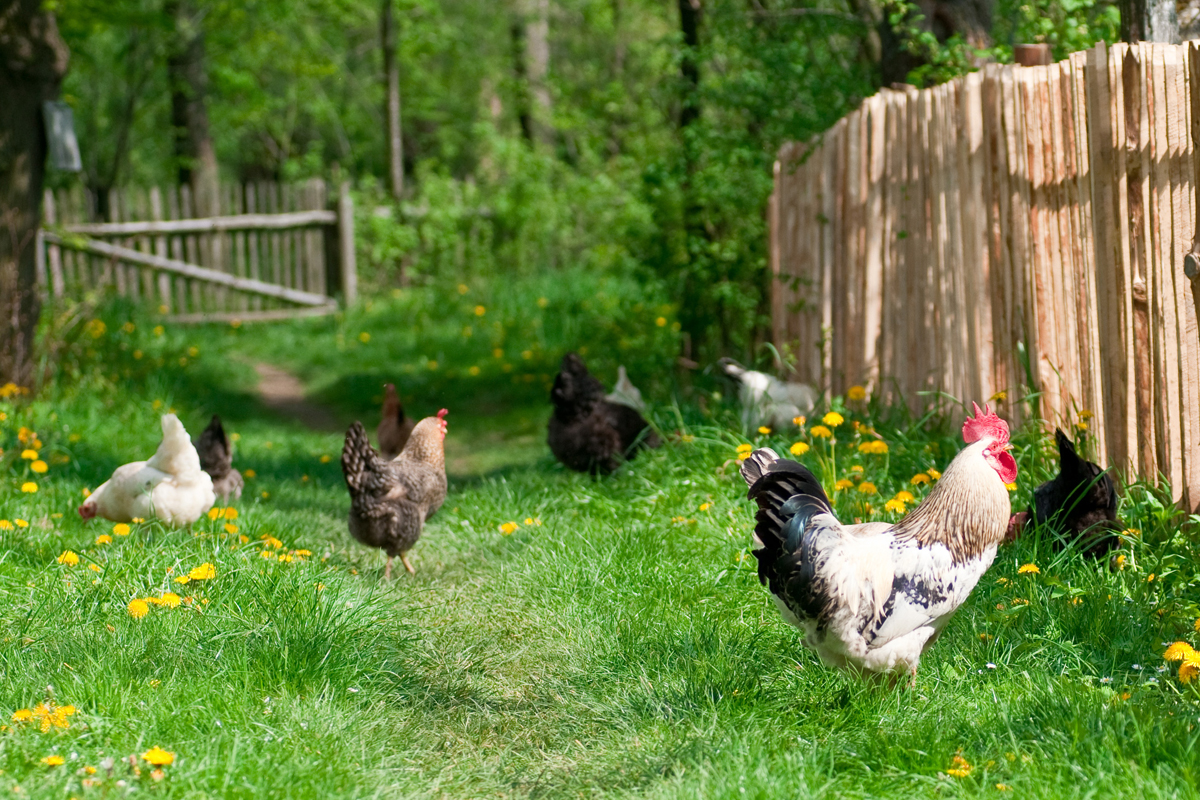 Why The Organic Industry Is Suing The Usda Over Animal Welfare