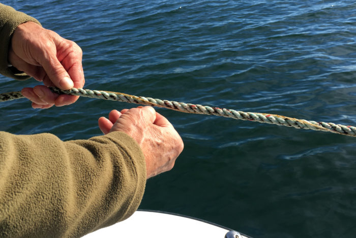 A spore-imbued rope for Olsen's seaweed farm. (Photo credit: Lisa Held)